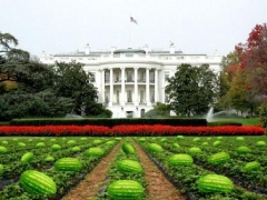Totally non-offensive picture showing the White House lawn prepped for the annual Easter watermelon hunt which, according to Los Alamitos Mayor Dean Grose, will replace the more traditional Easter egg hunt. Mayor Grose claims he was unfamiliar with the racial stereotype that Black people love watermelon.